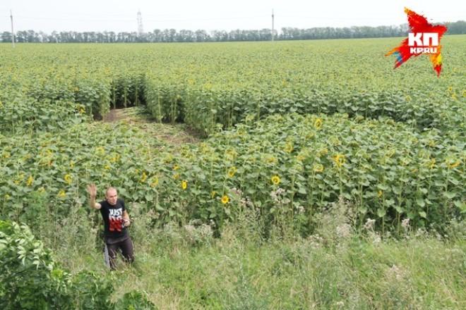 Странная пиктограмма на подсолнечном поле в Краснодарском крае