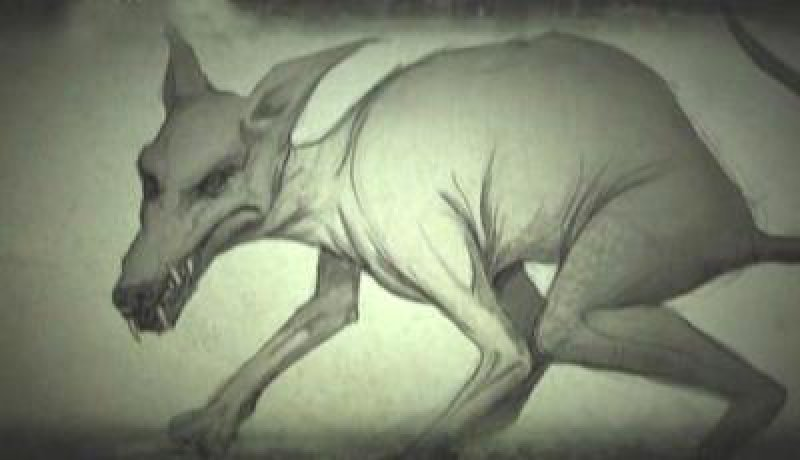 Загадочное существо поселилось в Кинешемском районе