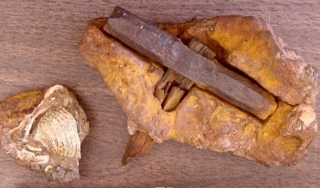 Komu patřilo kladívko staré 140 miliónů let?