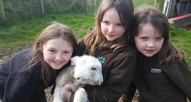 На ферме в Новой Зеландии родился двуликий ягненок (6 фото)