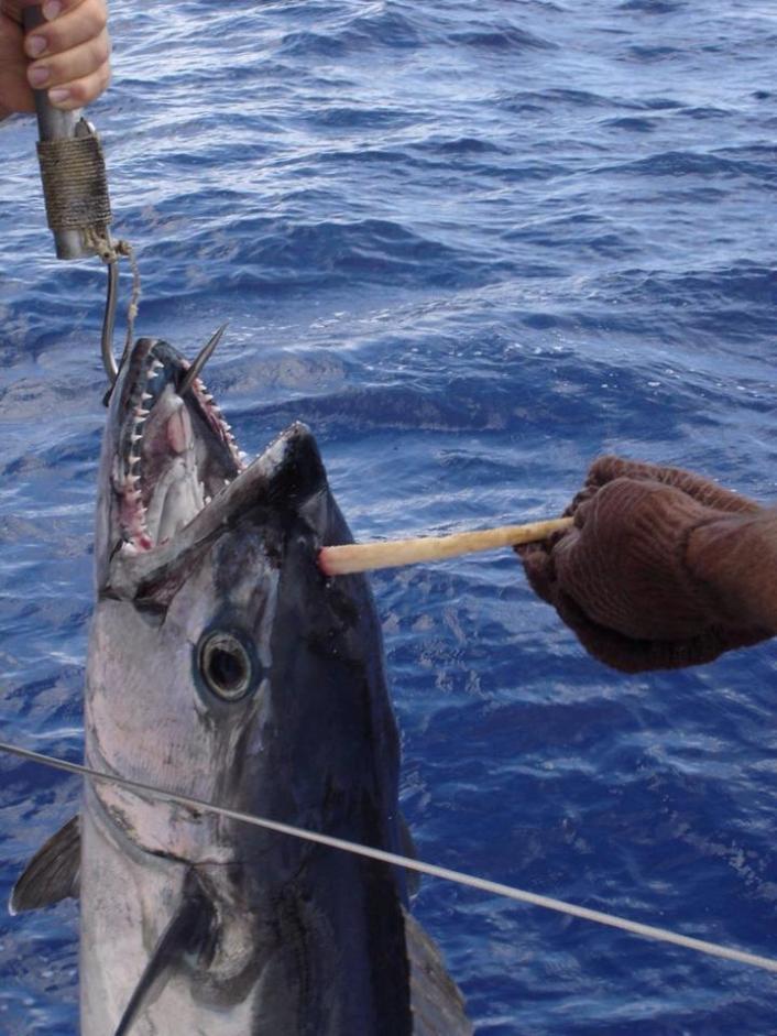 На что ловят тунец