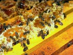 Пчеловоды мира пытаются разгадать тайну исчезновения пчел
