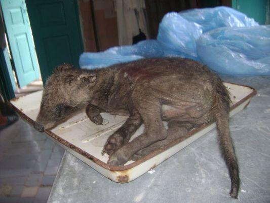 Зоологи не могут понять какого зверя подстрелили в Запорожье
