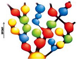 Мультиверсум имеет довольно сложную топологию: в нем множество самостоятельных вселенных, раздувшихся до космических размеров, со своими собственными законами природы в каждой. Иллюстрация: из архива Андрея Линде