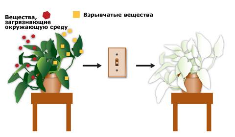 Растенията са интелигентни и могат да взимат важни решения