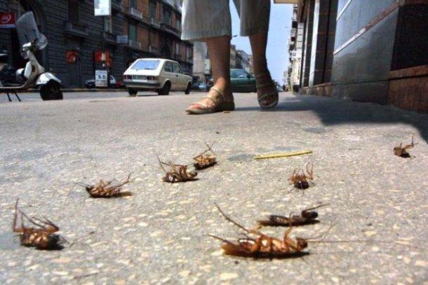 красивой ножкой раздавила таракана фото соответствовать