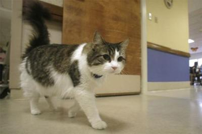 Больничный кот предсказал более 50 смертей