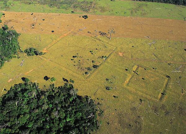 Рисунки в джунглях Южной Америки следы Эльдорадо?