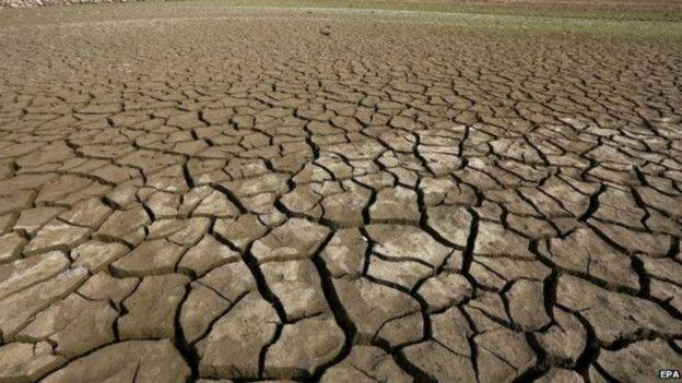Ученые: Земля вступает в новую фазу вымирания (3 фото)